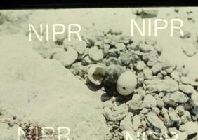 NIPR_000092.jpg
