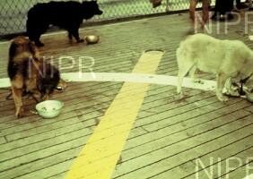NIPR_000121.jpg