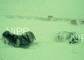 NIPR_000172.jpg