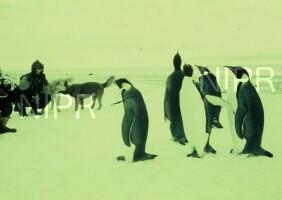 NIPR_000206.jpg