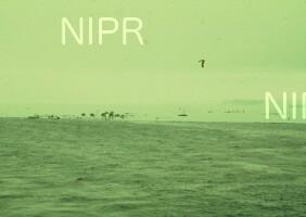 NIPR_000208.jpg