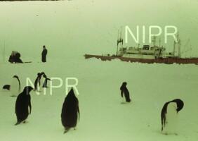NIPR_000257.jpg