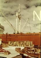 NIPR_000296.jpg