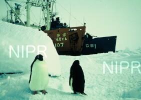 NIPR_000445.jpg