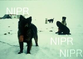 NIPR_000450.jpg