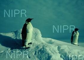 NIPR_000613.jpg