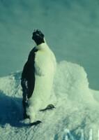 NIPR_000614.jpg