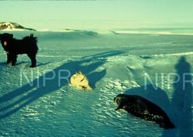 NIPR_000616.jpg
