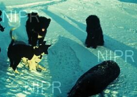 NIPR_000617.jpg