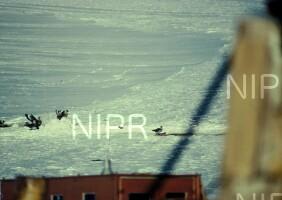 NIPR_000627.jpg