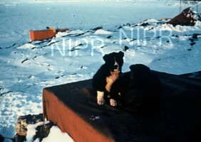 NIPR_000720.jpg