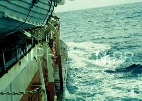 NIPR_000914.jpg