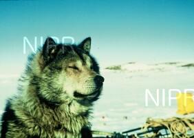 NIPR_000963.jpg