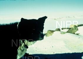 NIPR_000964.jpg