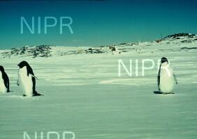NIPR_000965.jpg