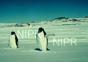 NIPR_000966.jpg