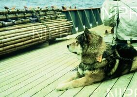 NIPR_000980.jpg