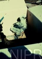 NIPR_001047.jpg
