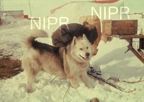 NIPR_001293.jpg