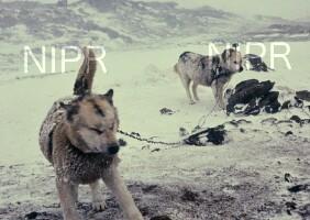 NIPR_001462.jpg
