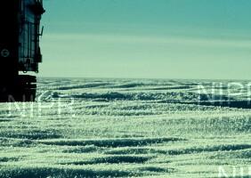 NIPR_001680.jpg