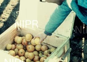 NIPR_001962.jpg