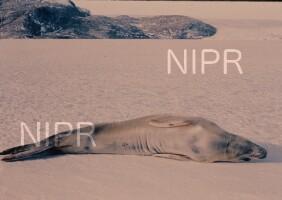 NIPR_002015.jpg