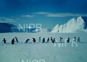 NIPR_002491.jpg