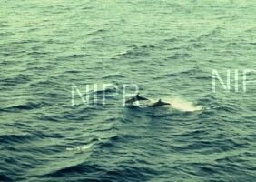 NIPR_002519.jpg