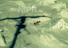 NIPR_002530.jpg