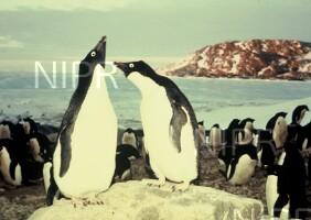 NIPR_002605.jpg
