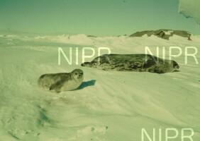 NIPR_002609.jpg
