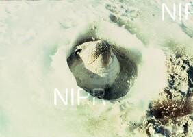 NIPR_002729.jpg