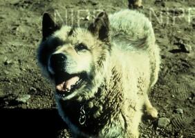 NIPR_003015.jpg