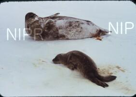 NIPR_003141.jpg