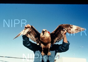 NIPR_003220.jpg