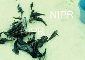 NIPR_003393.jpg