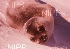NIPR_003421.jpg
