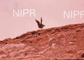 NIPR_003426.jpg