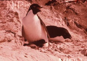 NIPR_003488.jpg