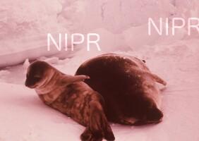 NIPR_003504.jpg