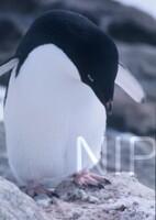 NIPR_003953.jpg