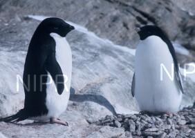 NIPR_003963.jpg