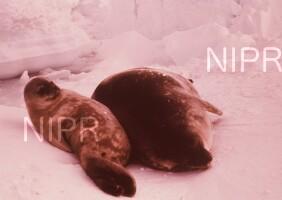 NIPR_004242.jpg