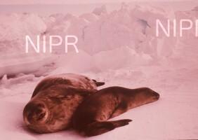 NIPR_004243.jpg