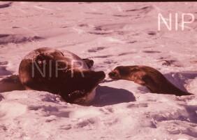 NIPR_004266.jpg
