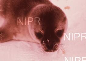NIPR_004320.jpg