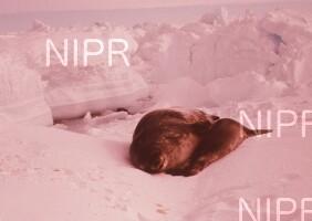 NIPR_004322.jpg
