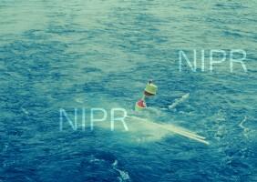 NIPR_004735.jpg