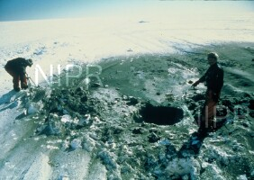 NIPR_005028.jpg